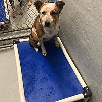 Adopt A Pet :: Ashe - Pipersville, PA