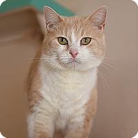Adopt A Pet :: Penske - Kanab, UT
