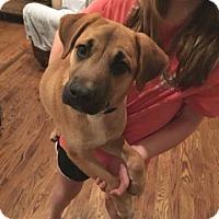 Adopt A Pet :: King - Pottstown, PA