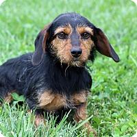 Adopt A Pet :: Florida - Waldorf, MD