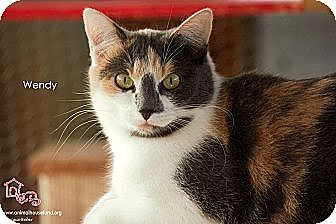 Calico Cat for adoption in St Louis, Missouri - Wendy