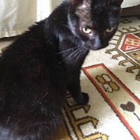 Adopt A Pet :: Godiva - Philadelphia, PA