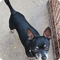 Adopt A Pet :: Chico - Oberlin, OH