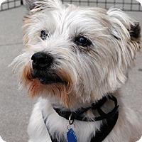 Adopt A Pet :: Chopper-Pending Adoption - Omaha, NE