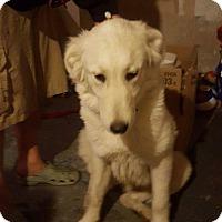 Adopt A Pet :: Naya - Northumberland, ON