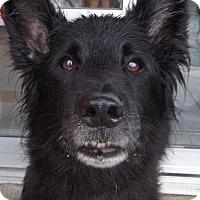 Adopt A Pet :: Ebony - Pierrefonds, QC
