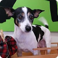 Adopt A Pet :: Willow - REDDING, CA