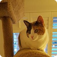 Adopt A Pet :: Patches - Laguna Woods, CA