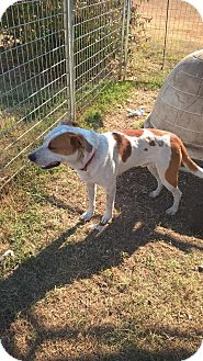 Australian Cattle Dog/Pointer Mix Dog for adoption in Pulaski, Tennessee - One Spot