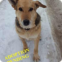 Adopt A Pet :: HUDSIN - Winnipeg, MB