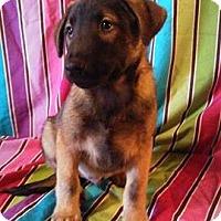 Adopt A Pet :: Slate - Houston, TX