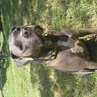 Adopt A Pet :: Paper - Texas - Fulton, MO