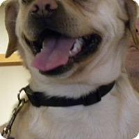 Adopt A Pet :: Browne - Farmington, MI