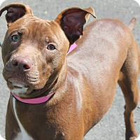 Adopt A Pet :: RED - Clayton, NJ