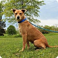 Adopt A Pet :: Ginger - Dillsburg, PA
