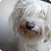 Adopt A Pet :: A435039 - San Antonio, TX