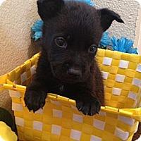 Adopt A Pet :: Mason - Inglewood, CA