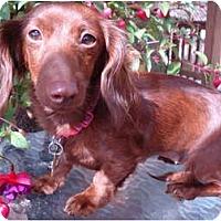 Adopt A Pet :: Ruby - San Jose, CA