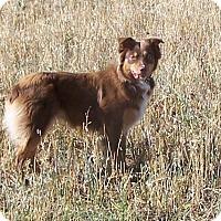 Adopt A Pet :: Sally - Chewelah, WA