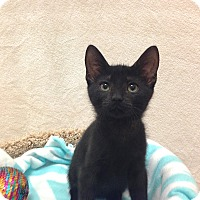 Adopt A Pet :: Nyall - Foothill Ranch, CA