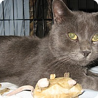 Adopt A Pet :: smokey - brewerton, NY