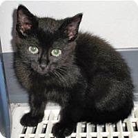 Adopt A Pet :: Chico - Edmonton, AB