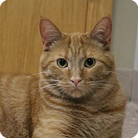 Adopt A Pet :: Lucious - Byron Center, MI