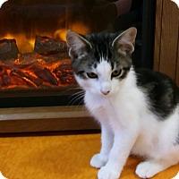 Adopt A Pet :: Hershey - Witter, AR