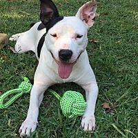 Adopt A Pet :: Sherman - Breaux Bridge, LA