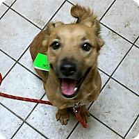 Adopt A Pet :: Lola - Schaumburg, IL
