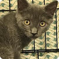 Adopt A Pet :: Brandon - Furlong, PA