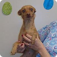 Adopt A Pet :: Juliet - Wildomar, CA