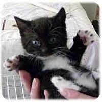 Adopt A Pet :: Alabama - Lancaster, MA