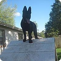Adopt A Pet :: Sassy - Green Cove Springs, FL