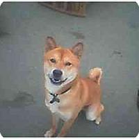 Adopt A Pet :: Lucky - Southern California, CA