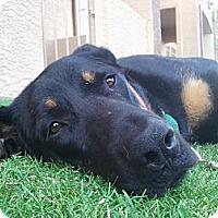 Adopt A Pet :: Markus - Phoenix, AZ