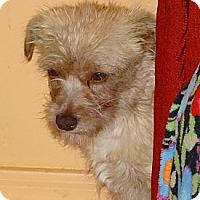 Adopt A Pet :: Reba - Tucson, AZ