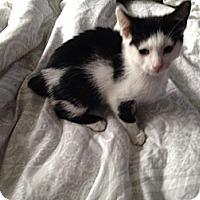Adopt A Pet :: Rabbit - Chilhowie, VA