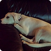 Adopt A Pet :: Ace - Homewood, AL
