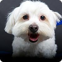 Adopt A Pet :: Spartacus - Nuevo, CA