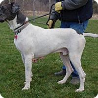 Adopt A Pet :: Mac - Pearl River, NY