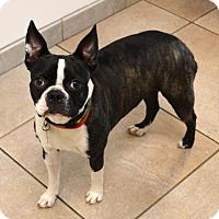 Adopt A Pet :: Lily - Huntington Beach, CA