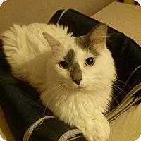 Adopt A Pet :: ALBERT - Northfield, OH
