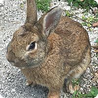 Adopt A Pet :: Justin - Miami, FL