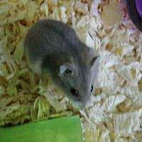 Adopt A Pet :: A1697215 - Los Angeles, CA