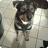 Adopt A Pet :: Dozer - Laingsburg, MI
