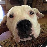 Adopt A Pet :: Sadie - Roswell, GA