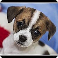 Adopt A Pet :: Bonnie - Fort Braff, CA