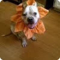 Adopt A Pet :: Lyric - Charlotte, NC