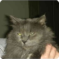 Adopt A Pet :: Bart - Washington Terrace, UT